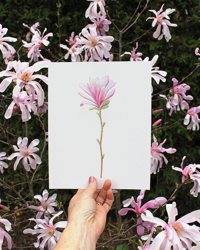 Star magnolia watercolor painting in front of magnolia tree
