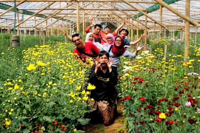 Wisata Kebun Bunga Krisan Poncokusumo Malang
