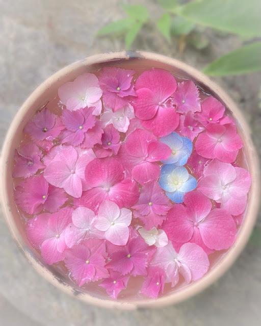 Maceta pequeña de hortensias rosas flotando en agua
