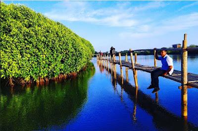 Foto Hutan Mangrove Congot Kulon Progo