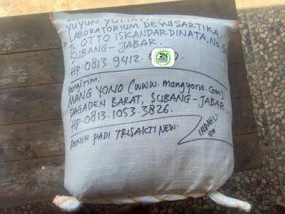 Benih PesananYUYUN YULIATIN Subang, Jabar. (Sesudah packing)