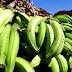 Vendedores de plátanos y asaltaron residencias de dos oficiales