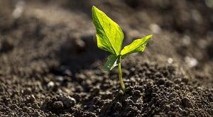 Beberapa sifat fisik tanah menurut Rustam, et al. (2016) terdiri dari bulk density (berat volume), permeabilitas tanah, porositas tanah, dan tekstur tanah. Selain itu, Lapadjati et al. (2016) juga mengatakan bahwa warna tanah merupakan salah satu dari sifat fisik tanah. Menurut Muslimin et al (2012), sifat kimia tanah terdiri dari 6 bagian sifat yakni pH tanah, koloid tanah, koloid organik, kapasitas tukar kation, kejenuhan basa, serta unsur-unsur hara esensial.