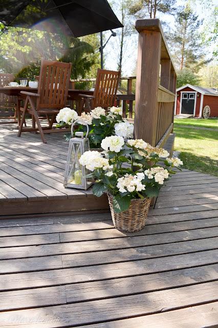 terassi kesä kukat terassihortensia kukka piha koti