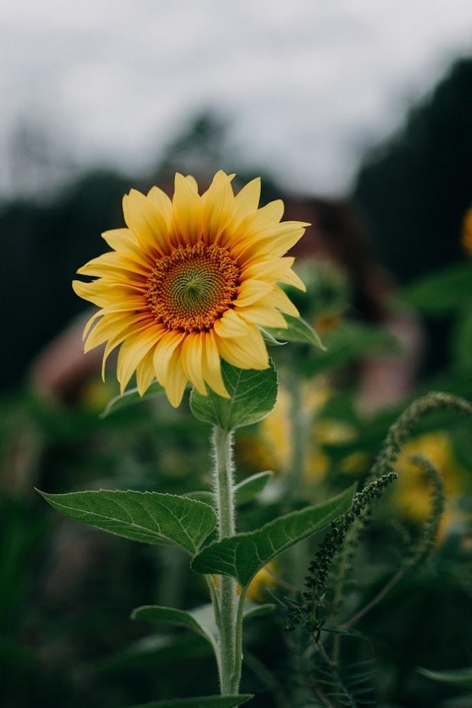 Laporan Praktikum Biologi Bunga