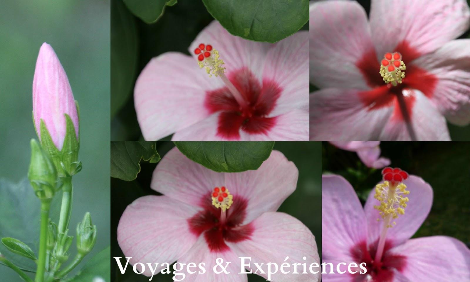 Voyages et Expériences : Fleurs de l'Ile Maurice: Beautés de la nature!