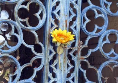 grade de um portão de um túmulo com uma flor