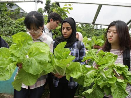 Puluhan Mahasiswa dari Berbagai Negara Studi Banding Urban Farming di Jakarta