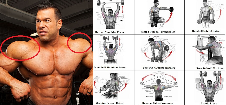 Build Arm Shoulder Muscles