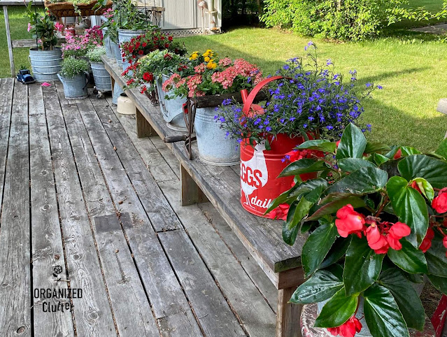 Photo of buckets of annuals on the deck.