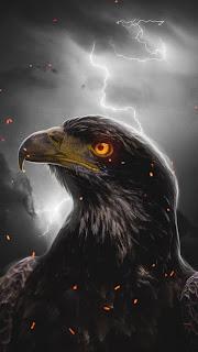 Eagle Orange Eye Mobile HD Wallpaper