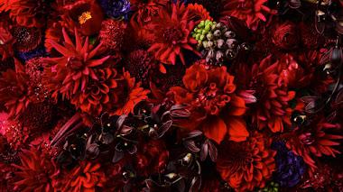 Doce meses de flores según Azuma Makoto para despedir el año