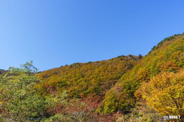 山を彩る紅葉~本栖湖西岸