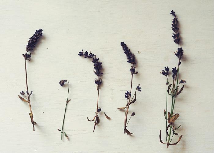 suszone kwiaty lawendy, kosmetyki DIY z lawendy