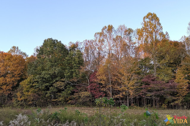 Colorful fall trees in Kentucky as seen from the Mammoth Cave Railroad Hike & Bike Trail
