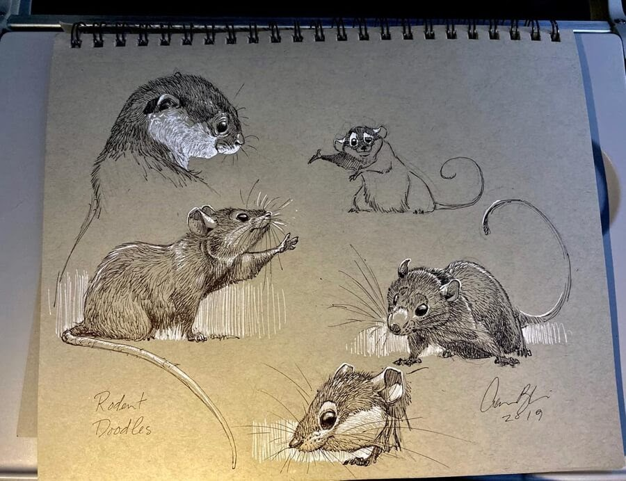 04-Rodent-Drawing-study-Aaron-Blaise-www-designstack-co