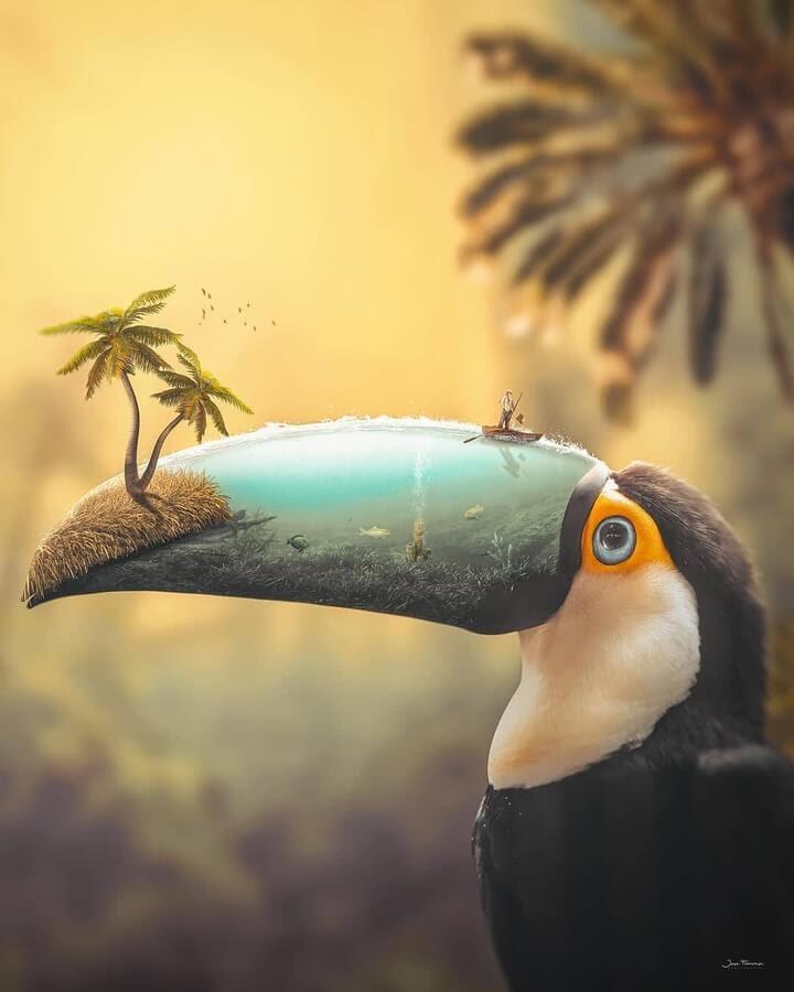 09-A-toucan-hidden-world-Art-Jose-Francese-www-designstack-co