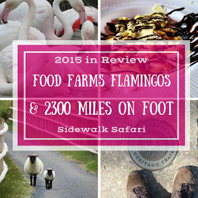 Sidewalk Safari - 2015 in Review - Food, Farms, Flamingoes and Nearly 2300 miles on Foot
