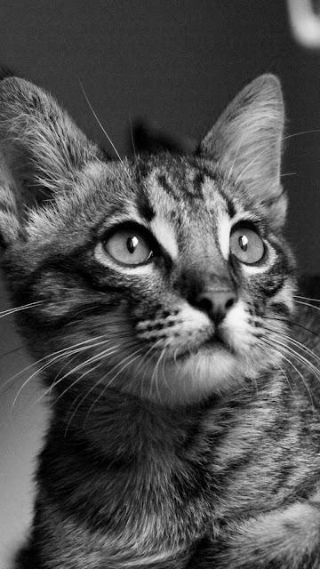 قطط,قطة,كيوت,قطط مضحكة,القطط,قطط جميلة,قطط صغيره,قطط كيوت,حيوانات اليفه,السعودية,قطوة,بنت كيوت,قطط لطيفة,قطط شقية,قطاو,الكويت,قطط مسلية,قطط للبيع,قطط جميله,قطه,شقاوة,حيوان,جميلة,حيوانات,قطط روعة,قطط فارسيه,قطط مجنونه,مقطع,قطط شيرازيه,لقطة,قطط مضحكه