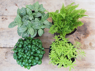 Houseplants That Clean Your Air | Carpet Cleaning | CT | Triple S |
