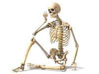 Apa Perbedaan Tulang Rawan dan Tulang Sejati?