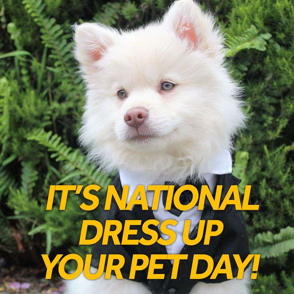 National Dress Up Your Pet Day Wishes Awesome Picture