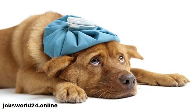 6 علامات مرض في الكلب أو القط