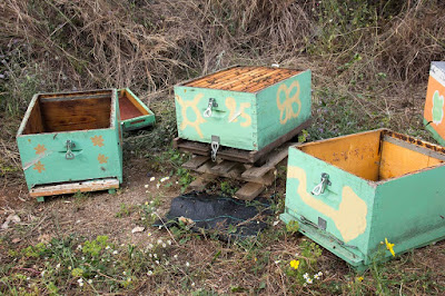 Παραφυάδες με την μέθοδο του μεγάλου μελισσοκόμου Prost