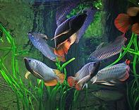 hệ thống lọc nước bể cá rồng