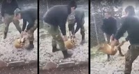Kαταδικάστηκαν σε 10 χρόνια φυλακή οι φαντάροι που είχαν κακοποιήσει σκύλο στην Κόνιτσα