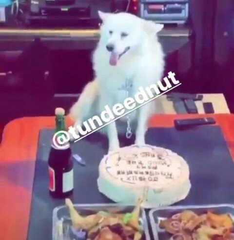 Nigerian Family Hosts Birthday Party For Their Dog (Photos)
