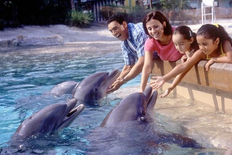 Alimentar os golfinhos no SeaWorld Orlando