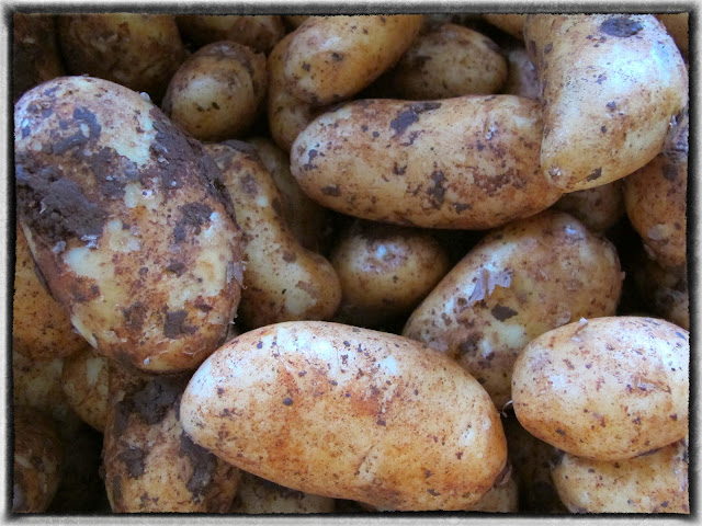 Cypriot red potatoes pic: Kerstin Rodgers/msmarmitelover.com