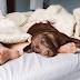 Νέα έρευνα: Το 75% κοιμάται με τον σκύλο του