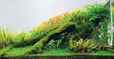 contoh aquascape nature
