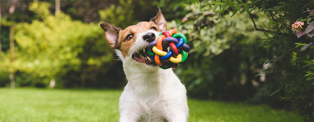 Why Do Dogs Shake Their Toys? The Answer Will Surprise You