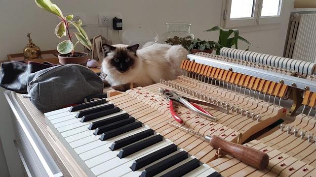 Réglage mécanique avec chat 1