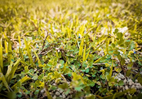 Grass Full HD CB Background Free Stock Image [ Download ]
