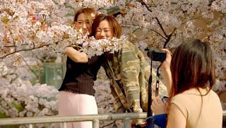 Cherry Blossom Celebration