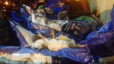 ضبط سيارة محملة بطن دواجن نافقة غير صالحة للإستهلاك الآدمى قبل طرحها فى الأسواق استغلالها لأزمة فيروس كيرونا