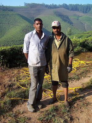 Jardiniers dans les champs de thé
