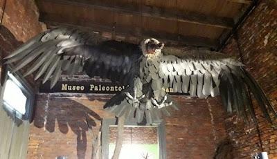 Fosil Burung Condor Raksasa Ditemukan Di Argentina
