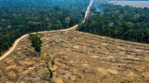 Amazonía de Brasil perdió 8.426 kilómetros cuadrados