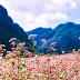Cùng lên Hà Giang ngắm hoa Tam Giác Mạch chào mùa thu