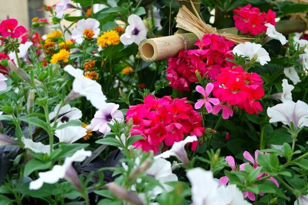 bourg-en-bresse fleurs