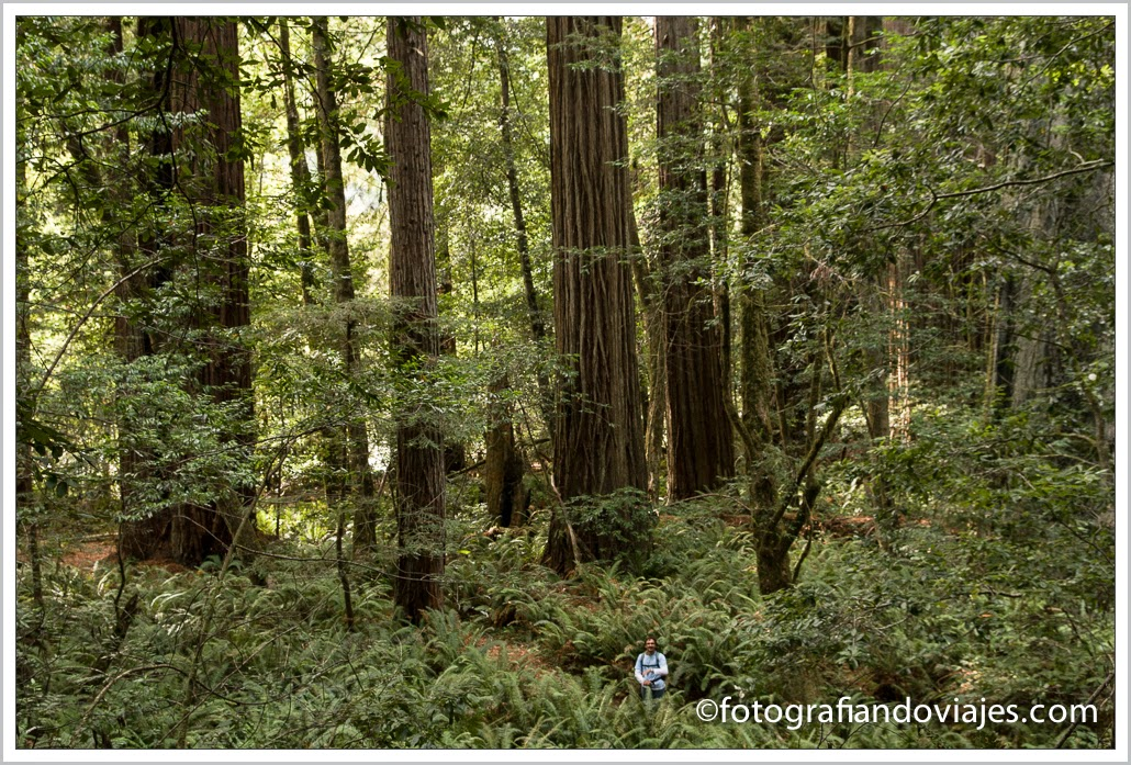 Tall trees trail en Redwood