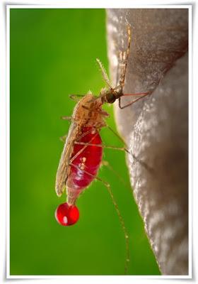 cara pencegahan dan pengobatan malaria