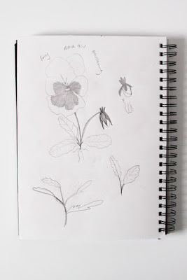 pansies, sketchbook, garden sketching, Anne Butera, My Giant Strawberry
