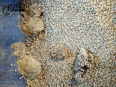 Pasir Gumpal Merk Royal Cat Sand