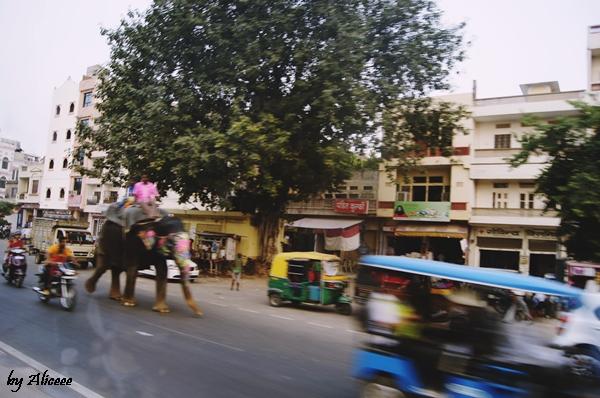 elefant-jaipur